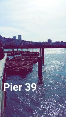 Sea lions in Pier 39